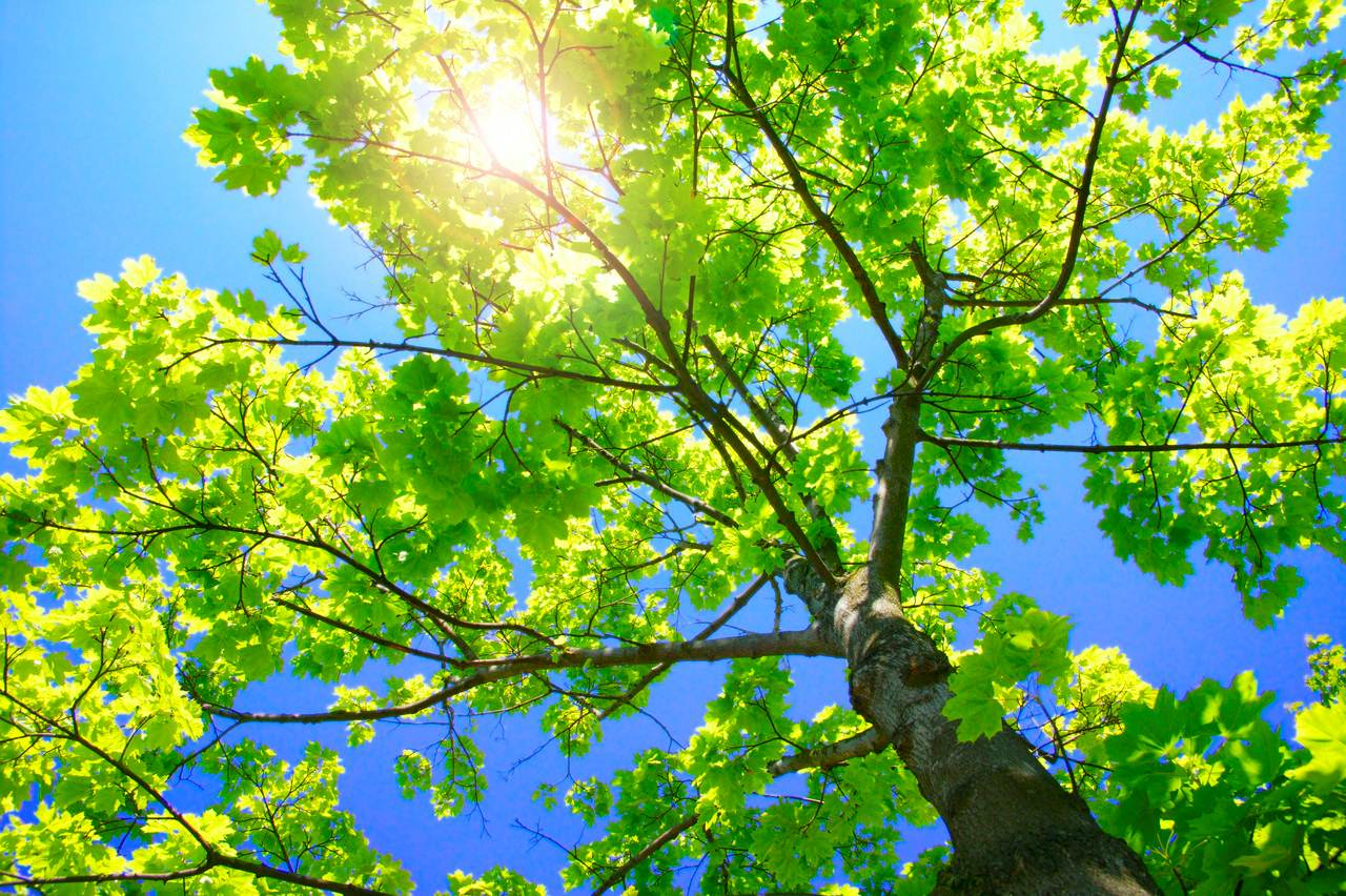 Bildergebnis für sun behind tree